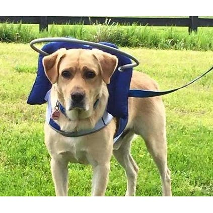 Halo For Blind Dogs Angel Wing Blue