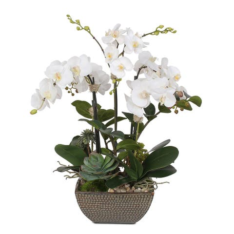 Two Tone White Silk Phalaenopsis Orchids, Succulent, ZZ Plant in Pot - 20W x 16D x 26H