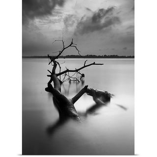 Poster Print entitled Dead tree in black and white