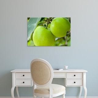 Easy Art Prints Paul Thompson's 'Two Cooking Apples On Tree' Premium Canvas Art