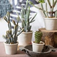 RusticReach Cactus Bonsai Potted Plant