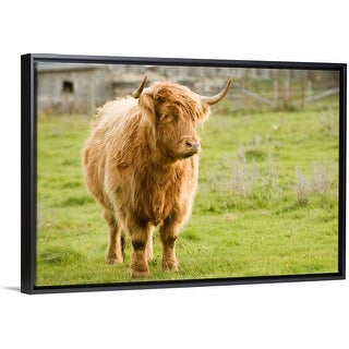 """""""Highland Cattle in Pasture, Burnt River, Ontario, Canada"""" Black Float Frame Canvas Art"""