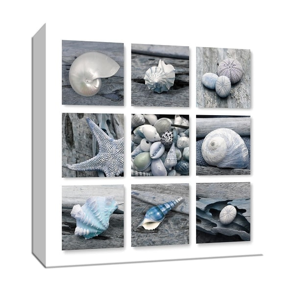 """PTM Images 9-147641 PTM Canvas Collection 12"""" x 12"""" - """"Driftwood Shell Collection"""" Giclee Shells Art Print on Canvas"""