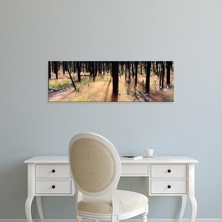 Easy Art Prints Panoramic Image 'New Growth after The Forest Fire, Yellowstone National Park, Wyoming' Canvas Art