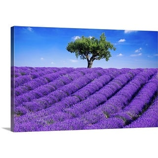 """""""Lavender field in summer with one tree. Haute Provence, France"""" Canvas Wall Art"""