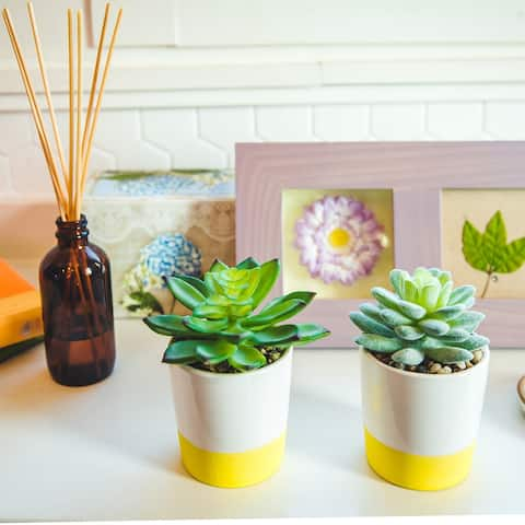 Set of 2 Artificial Plant Succulent IN CERAMIC COLOR BLOCK Pot - ONE-SIZE