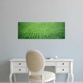 Easy Art Prints Panoramic Images's 'Rice Field, Japan' Premium Canvas Art
