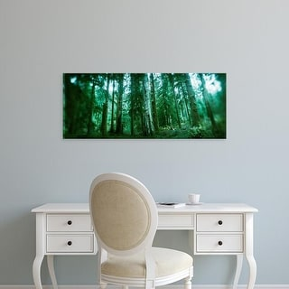 Easy Art Prints Panoramic Image 'Trees in rainforest, Olympic National Park, Olympic Peninsula, Washington' Canvas Art