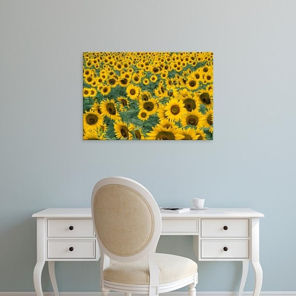 Easy Art Prints Adam Jones's 'Kentucky Pattern In Field Of Cultivated Sunflowers' Premium Canvas Art