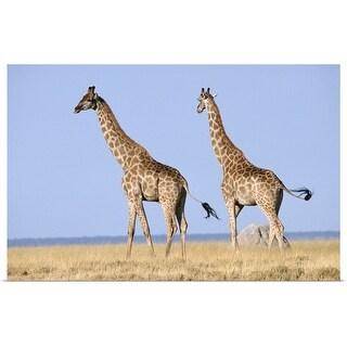 """Etosha National Park, Namibia"" Poster Print"
