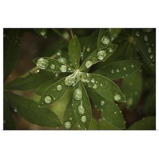 """Rain"" Poster Print"