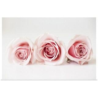 """""""Studio shot of pink roses"""" Poster Print"""
