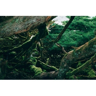 Trees & Forest Photograph Art Print