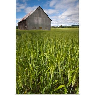 """""""USA, Oregon, View through wheat field on wooden barn"""" Poster Print"""