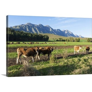 """""""Cows grazing in the pastures of a Greyton Farm, Overberg, South Africa"""" Canvas Wall Art"""