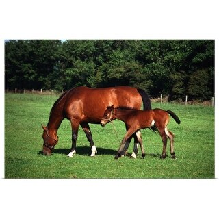 """""""mare with foal"""" Poster Print"""