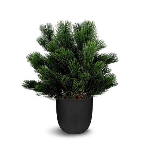 """Faux Botanical Pinus in Green Finish 28"""" Height - 28""""H"""