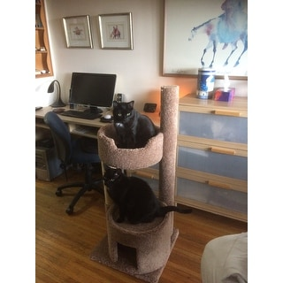 New Cat Condos Beige/Brown Carpeted Wood Large Cat Perch & House with Sisal Rope Scratching Post