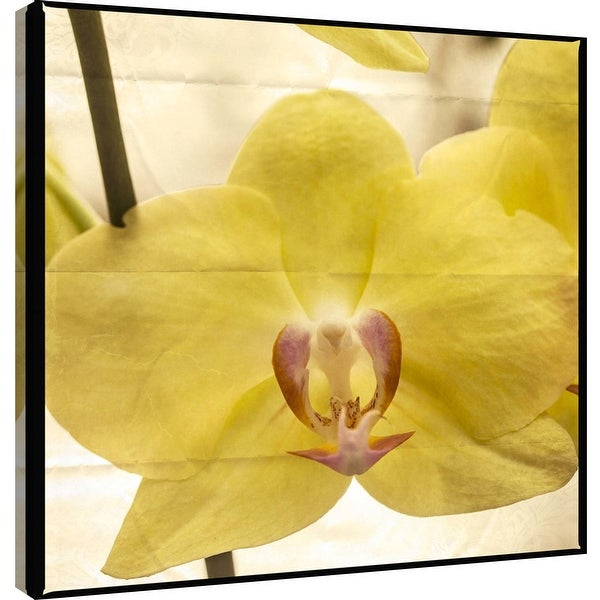 "PTM Images 9-101262 PTM Canvas Collection 12"" x 12"" - ""Yellow Orchid"" Giclee Orchids Art Print on Canvas"
