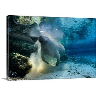 Premium Thick-Wrap Canvas entitled Florida manatee, Florida