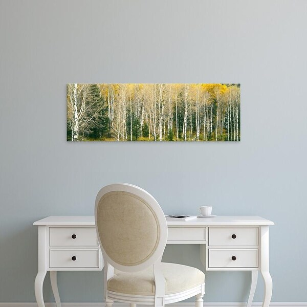 Easy Art Prints Panoramic Image 'Dense of Aspen trees in forest, Grand Teton National Park, Teton, Wyoming' Canvas Art