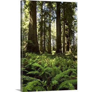 """Redwoods National Park, California"" Canvas Wall Art"