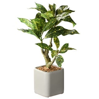 "Link to 11"" Croton Plant Similar Items in Decorative Accessories"