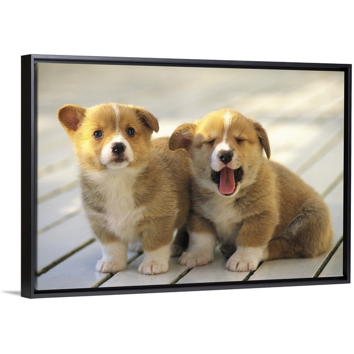 Welsh Corgi Black Float Frame Canvas Art Overstock 25502460