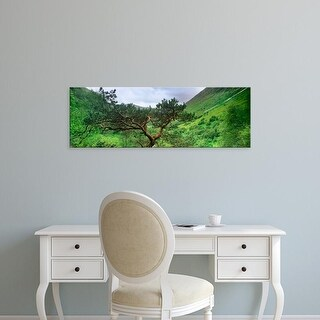 Easy Art Prints Panoramic Images's 'Scots Pine trees on a mountain, Glen Nevis, Highlands Region, Scotland' Canvas Art
