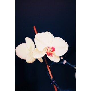 White Japanese Flower Canvas Wall Art Photograph