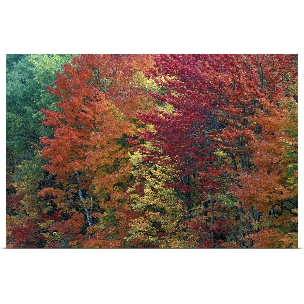 Shop Sugar Maple Trees In Autumn Color Michigan Usa Poster Print Overstock 16493204,Personal Space Meme