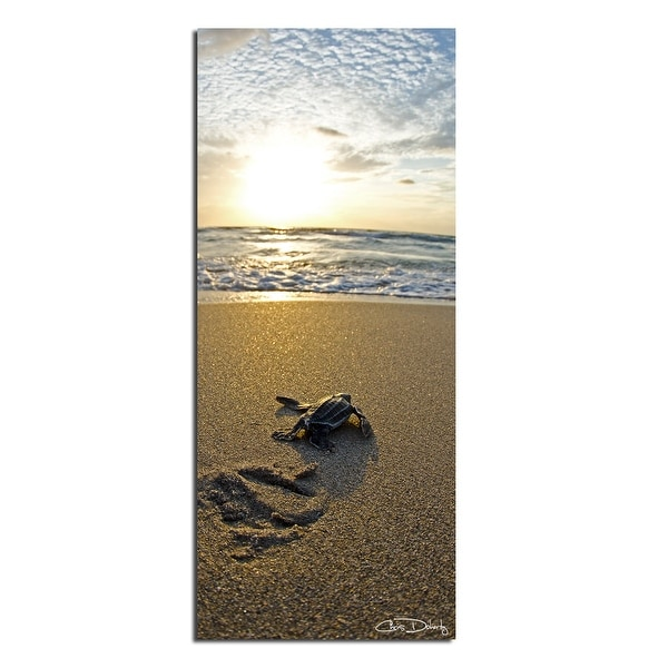 Ready2HangArt 'Baby Sea Turtle' Wrapped Canvas Wall Art. Opens flyout.