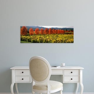 Easy Art Prints Panoramic Images's 'Crop in a vineyard, Napa Valley, California, USA' Premium Canvas Art