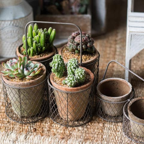 RusticReach Terracotta Planter in Wire Carry Basket
