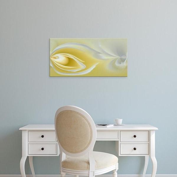 Easy Art Prints Adam Jones's 'White Rose Close