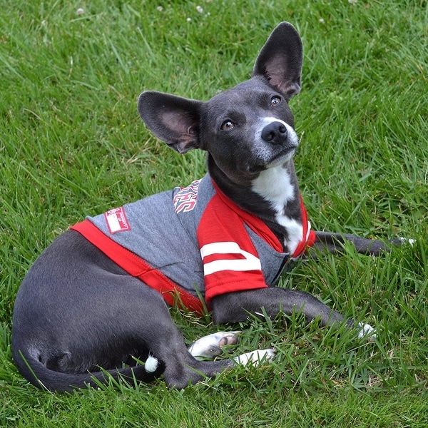 NCAA Wisconsin Badgers Mesh Dog Football Pet Jersey