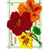 Nasturtium (dwarf) - Vintage Seed Packet (100% Cotton Towel Absorbent)