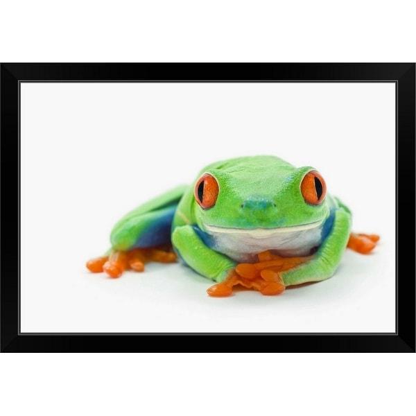 """Red-Eyed Tree Frog (Agalychnis Callidryas)"" Black Framed Print"