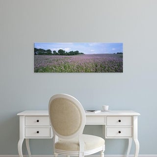 Easy Art Prints Panoramic Images's 'Phacelia flowers in a field, Germany' Premium Canvas Art