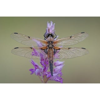 Dragonfly On Flower Photograph Wall Art Canvas