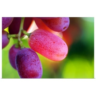 """Red table grapes"" Poster Print"