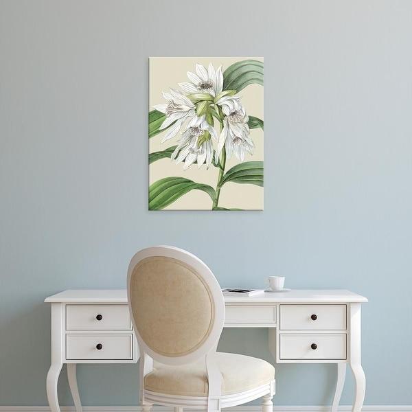 Easy Art Prints Vision Studio's 'Small Orchid Blooms III' Premium Canvas Art
