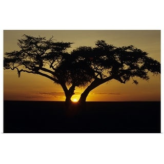"""""""Fig tree silhouetted at African dawn, Kenya, Africa"""" Poster Print"""