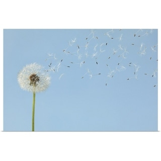 """""""Dandelion with seeds flying away"""" Poster Print"""