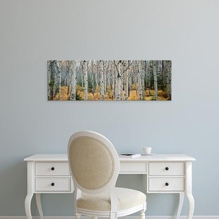 Easy Art Prints Panoramic Images's 'Aspen trees in a forest, Alberta, Canada' Premium Canvas Art