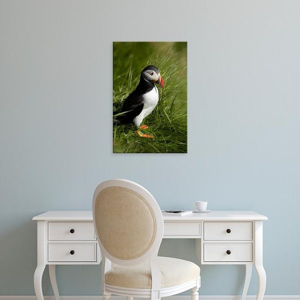 Easy Art Prints David Wall's 'Puffin I' Premium Canvas Art