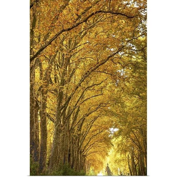 """Lane of plane trees."" Poster Print"