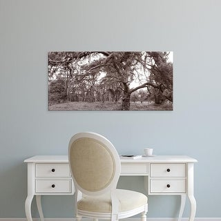 Easy Art Prints Panoramic Image 'Scots Pines trees, East Wretham Heath, Breckland, Norfolk, England' Canvas Art