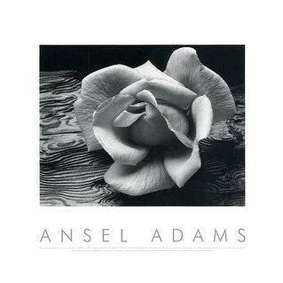 ''Rose and Driftwood'' by Ansel Adams Floral Art Print (16 x 20 in.)