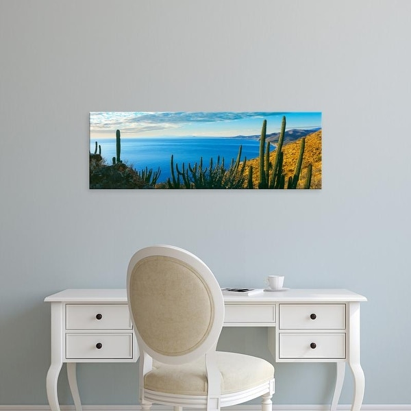 Easy Art Prints Panoramic Image 'Cactus, Bahia Las Palmas, Punta Pescadero, Baja California Sur, Mexico' Canvas Art